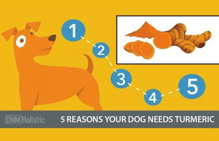 5-reasons-dugs-turmeric