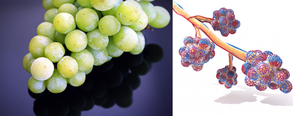 Grapes look like the albeoli