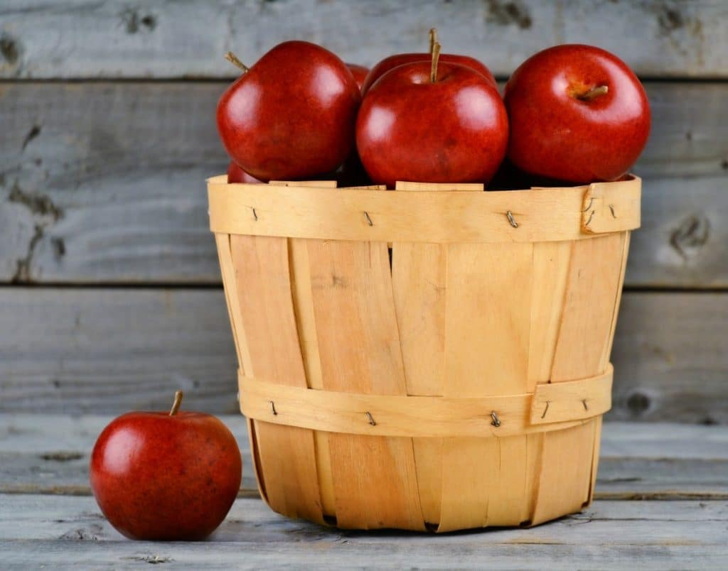 apple nature plant farm fruit orchard food red harvest produce garden basket healthy juice outdoors gardening apples picking flowering plant rose family man made object land plant