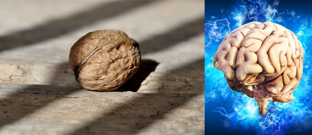 A walnut looks like the brain