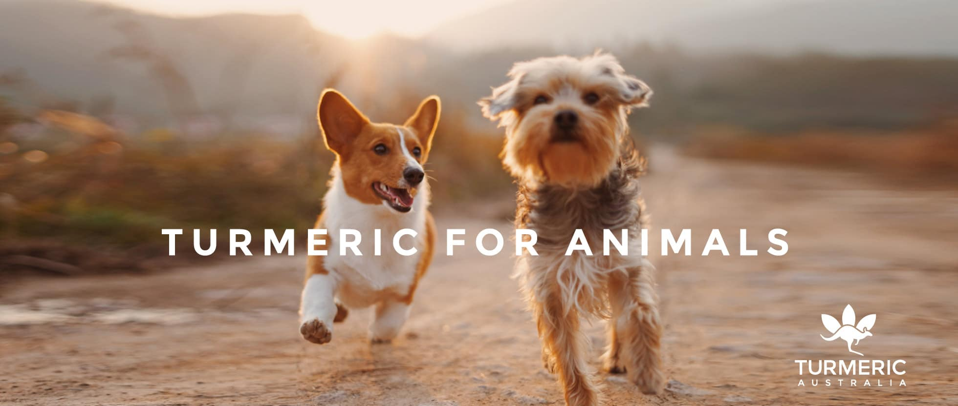 turmeric for animals